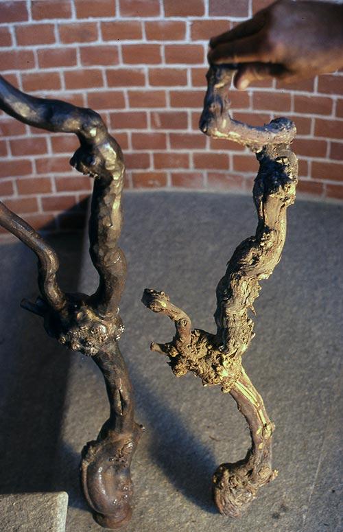 Scala a pianta di vite-6